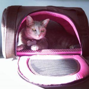 Bolsa de transporte gato